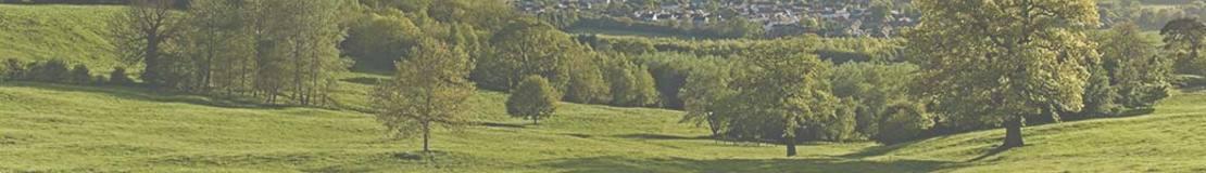 landscape shot of a green field